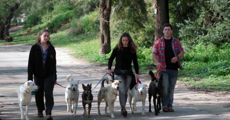החניכים והכלבים של הדסה נעורים